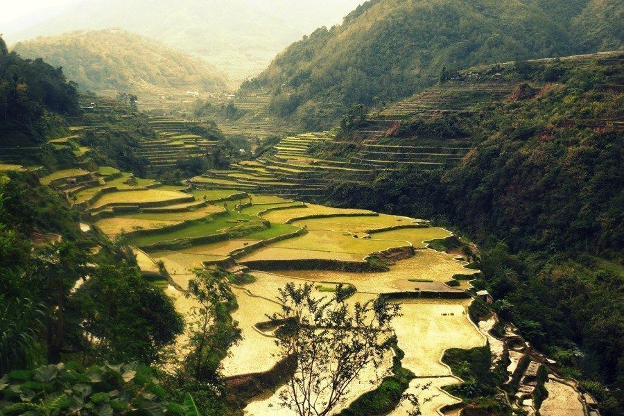 Rice Terraces Why