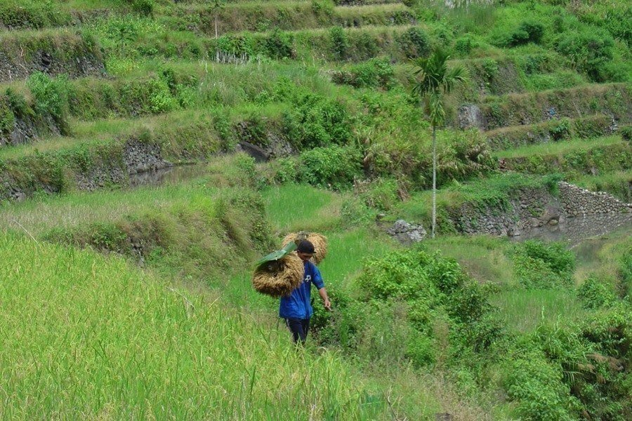 Rice Terraces Youth Migration