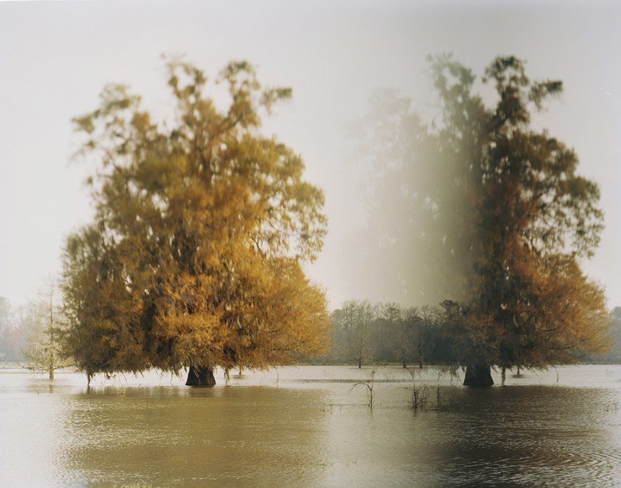 disappearing rivers disapperaing trees altamaha