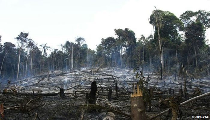 Most Threatened Tribe Deforestation