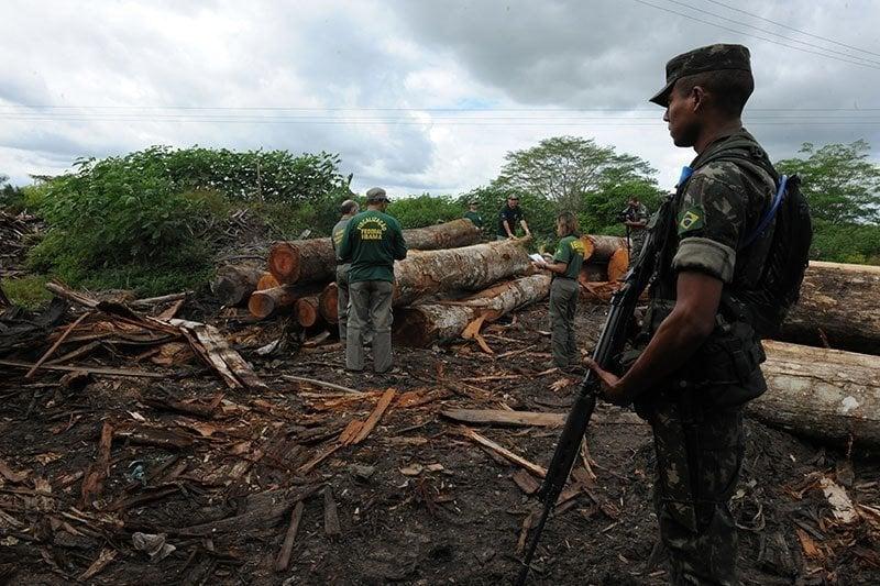 Logging In The Amazon