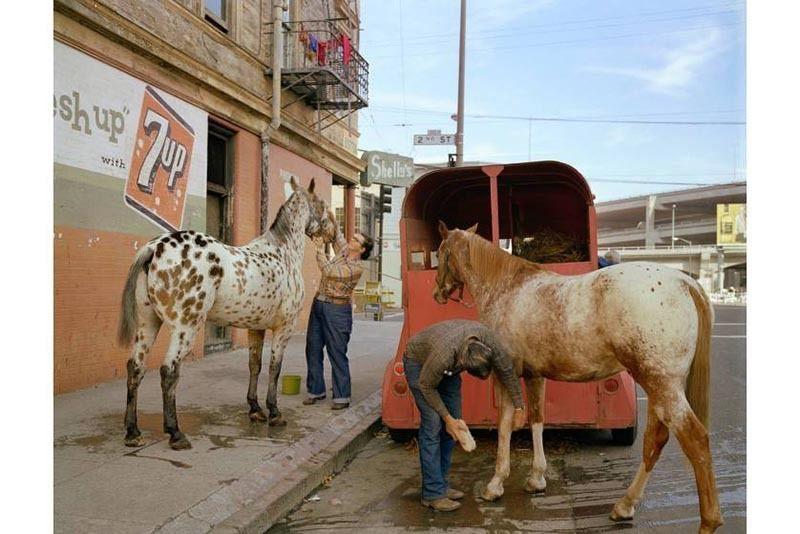 Vintage San Francisco Horses