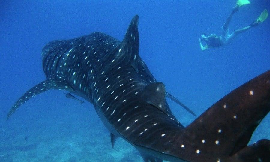 Diving Ecotourism