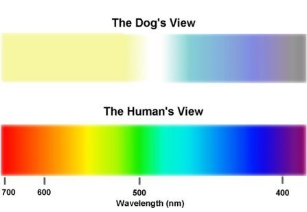 Color Blind Dog Perception