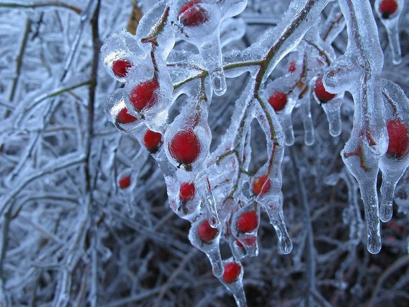 Global Warming Frozen Cherries