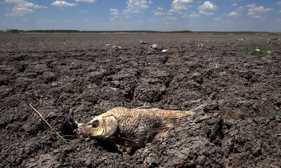 Global Warming Texas Drought