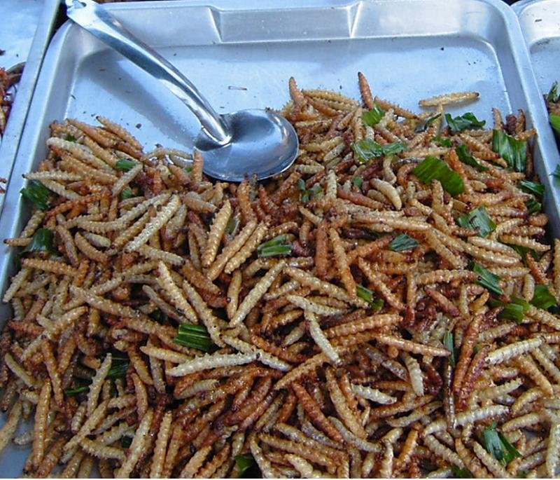 Gross Food Bamboo Worms