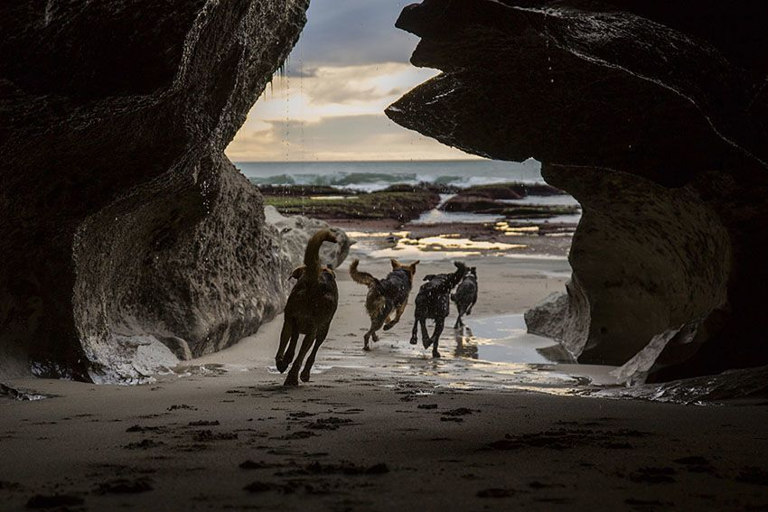 Hard Working Dogs Cave
