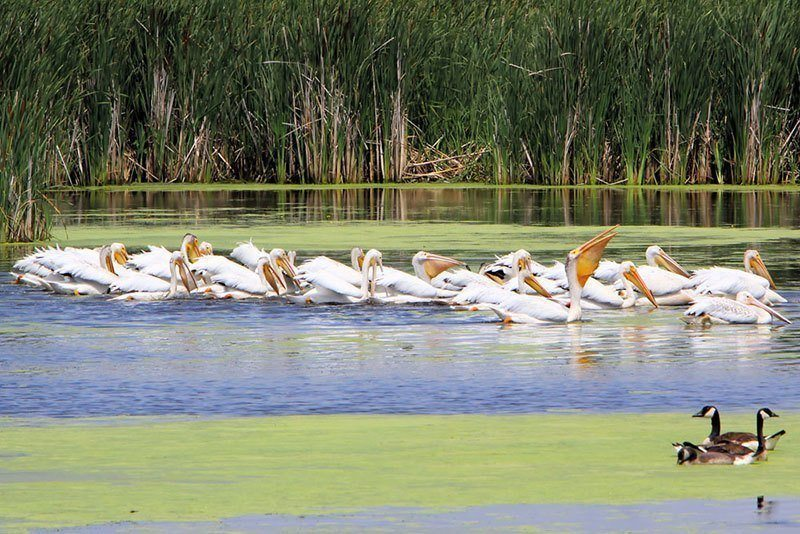 Marshland Hidden Wonders