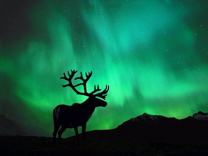 Northern Lights Hidden Wonders