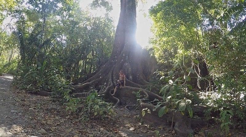 Tree Climbing In Costa Rica