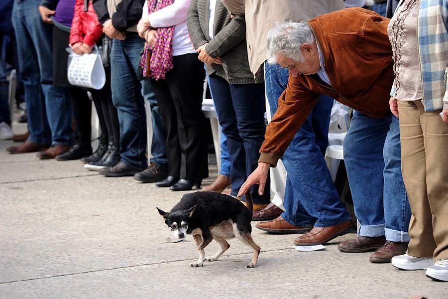 Jose Mujica Quotes Petting Dog