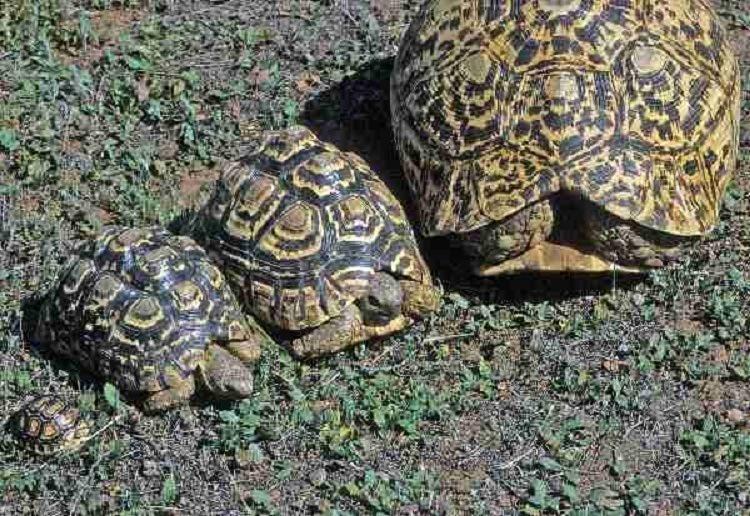 Science Pranks Turtles