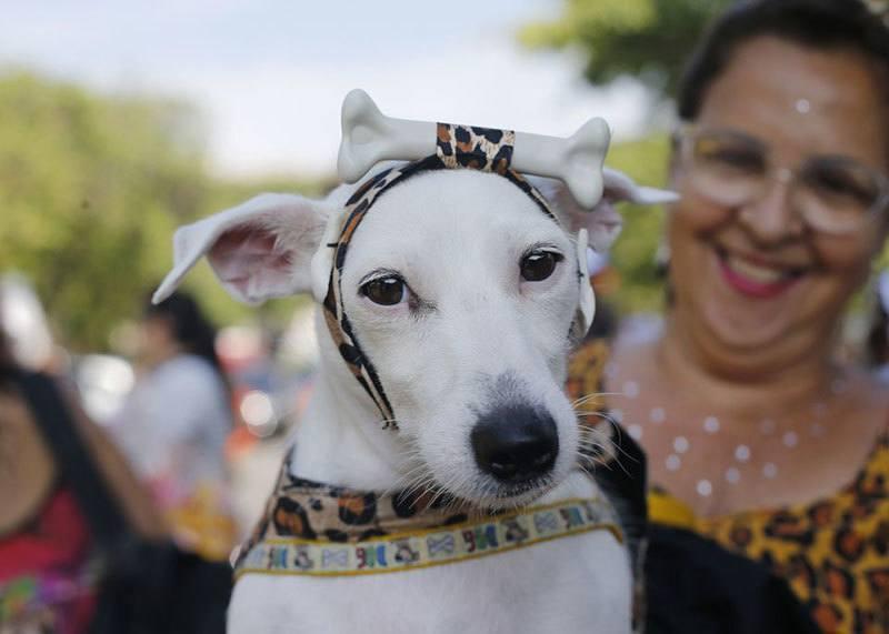 Carnival Dog Parade
