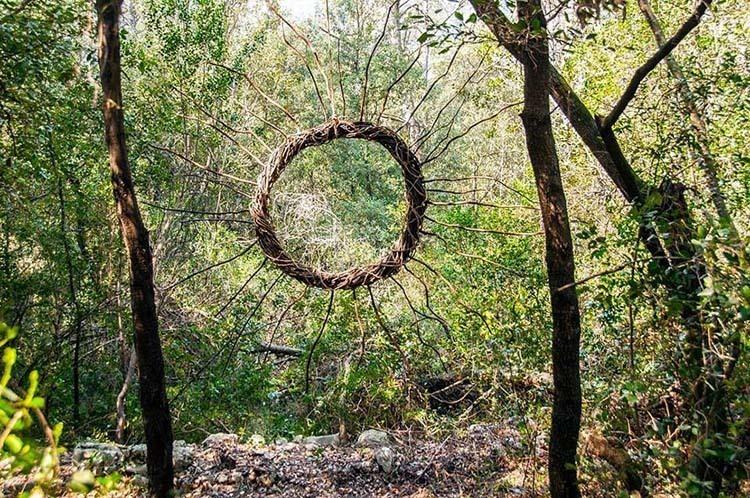Spencer Byles forest sun