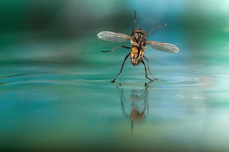World Photography Bug