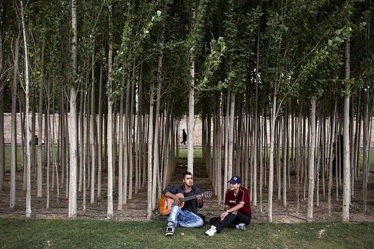 Everyday iran trees