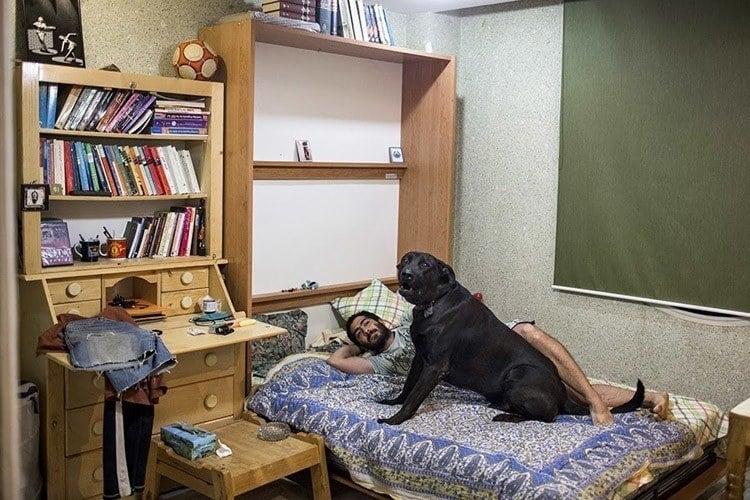 Everyday iran dog bed