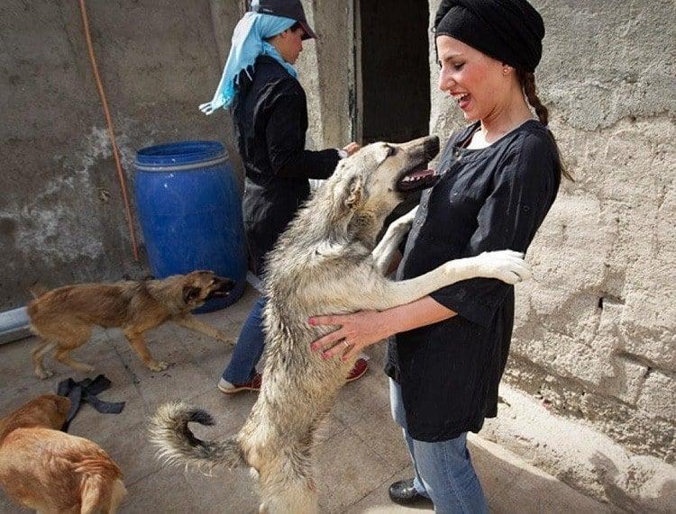 Everyday iran dog shelter volunteer
