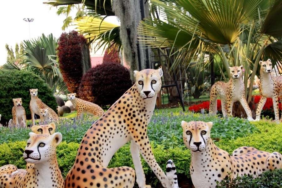 nong nooch cheetahs