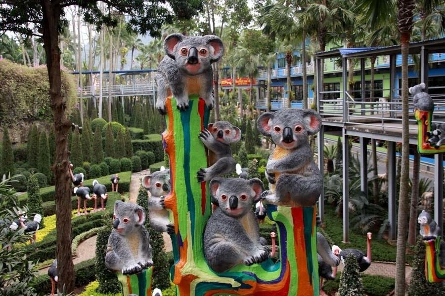nong nooch crazy koalas