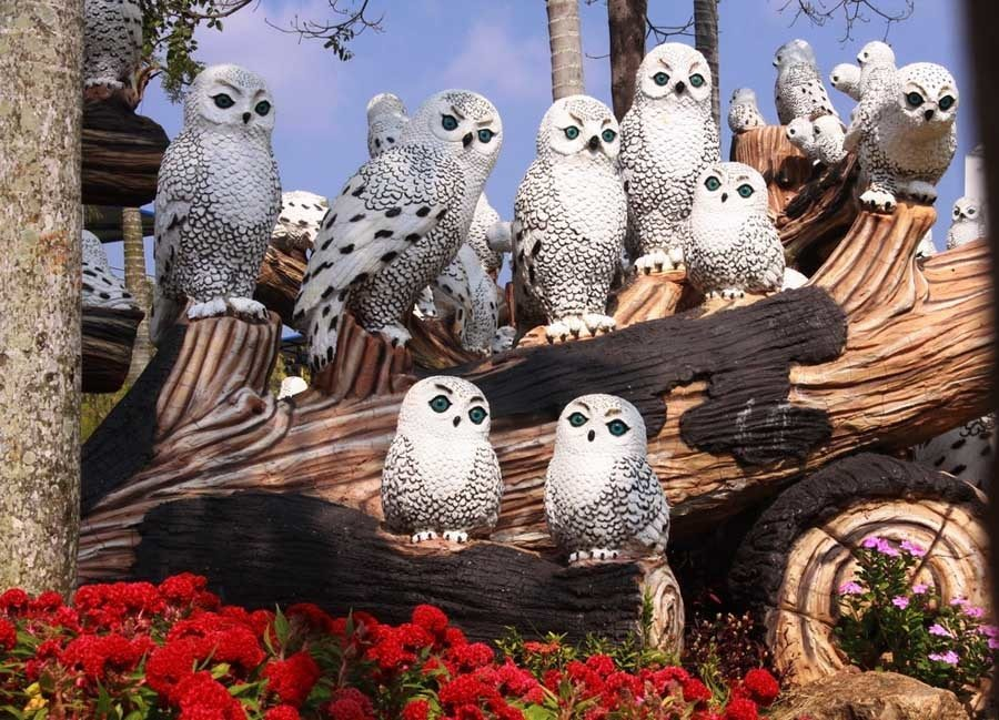 Owls In Thailand Garden