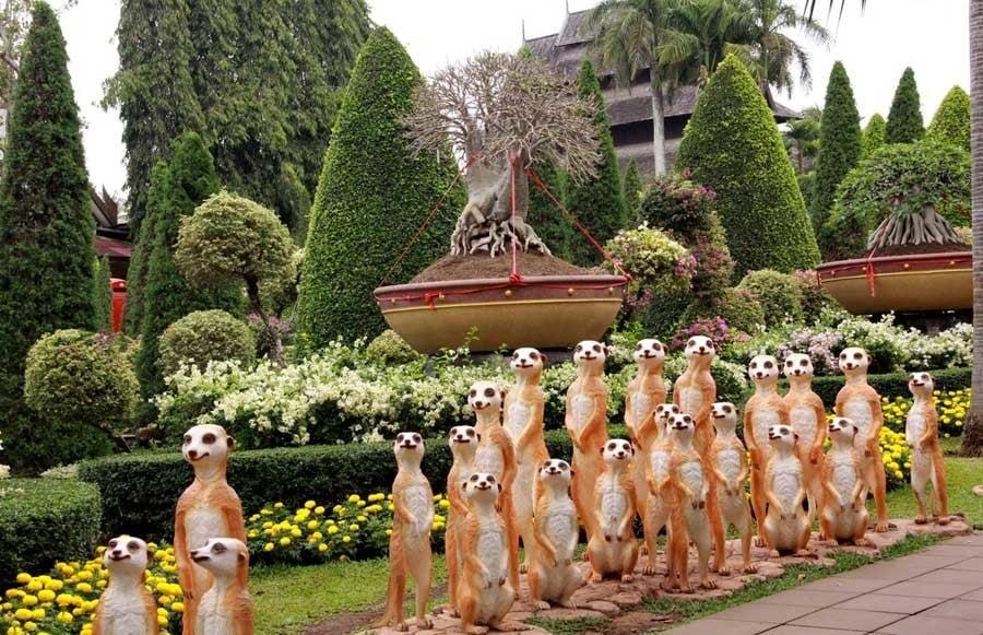 nong nooch meerkats