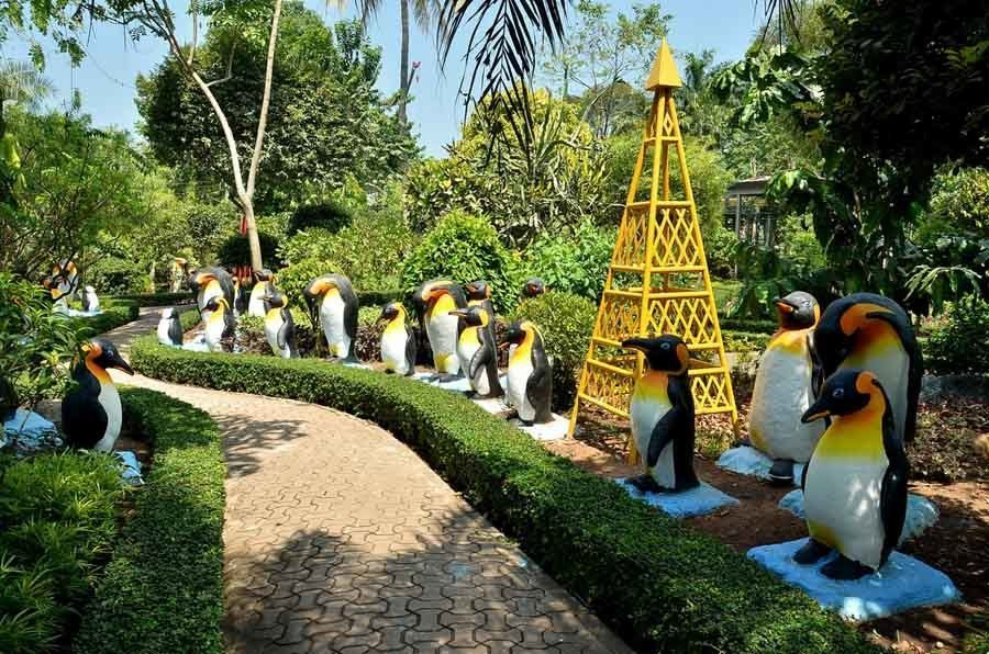 nong nooch penguins