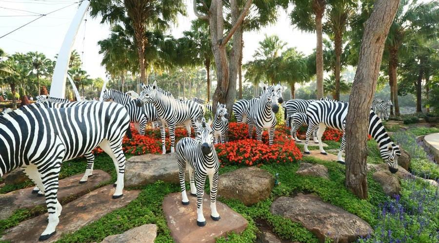 nong nooch zebras