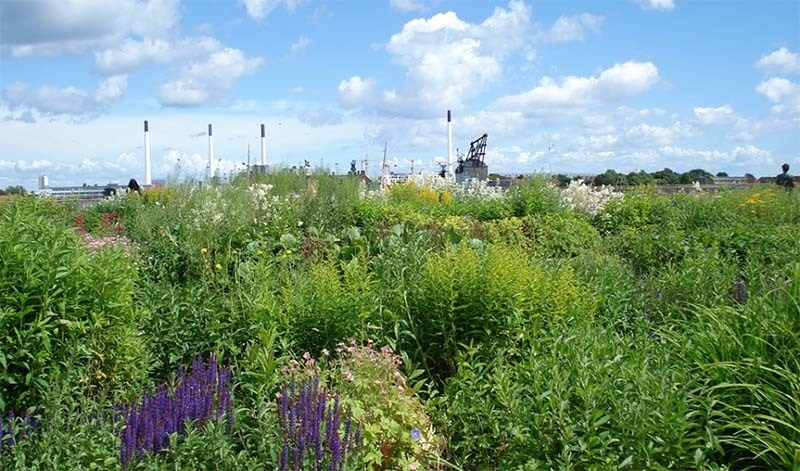 Greenest City Roof Garden