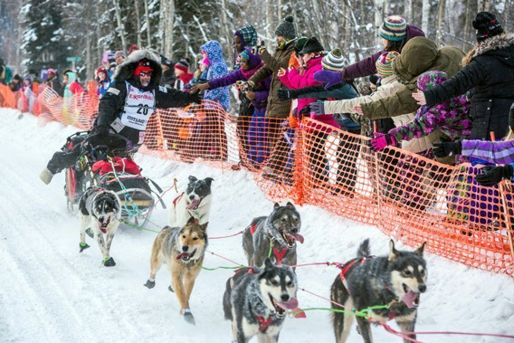 iditarod race 2015 high five