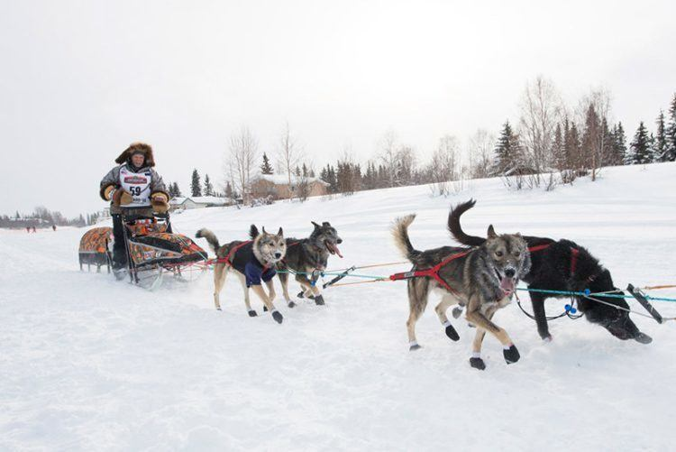 iditarod trail running