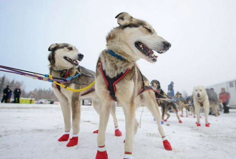 iditarod 2015 twin runners