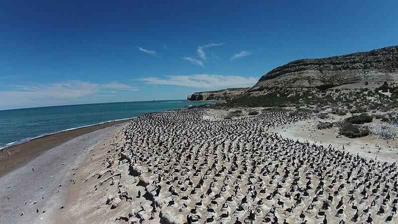 Nesting Seabirds