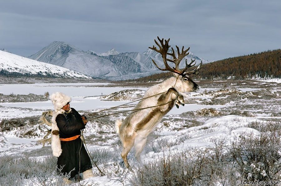 reindeer people frightened deer