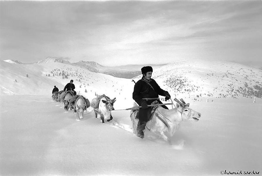 reindeer people herd leader