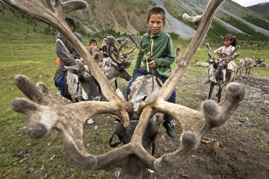reindeer people large antlers