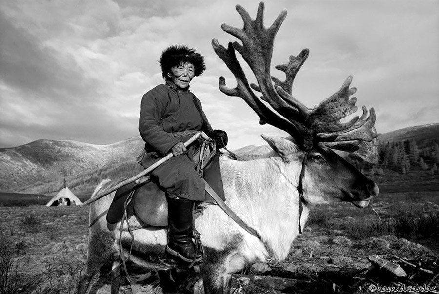reindeer people riding man