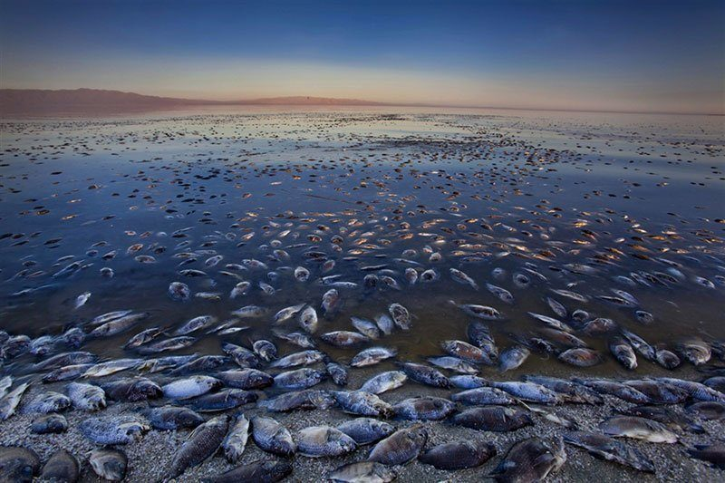 Dying Fish at Salton Sea