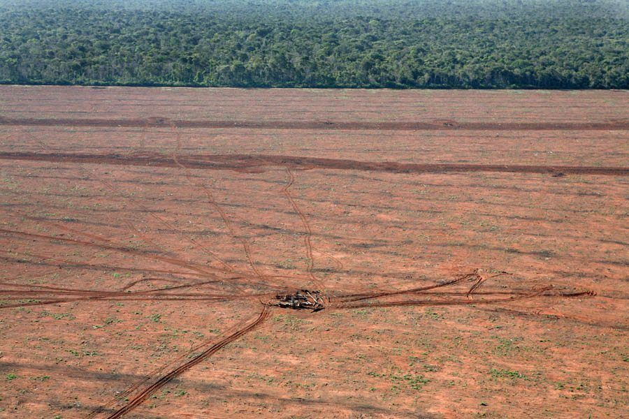 earth in crisis cleared rainforest