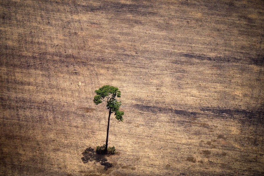earth in crisis deforestation