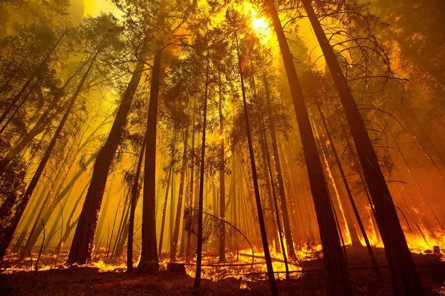 earth in crisis trees wildfire