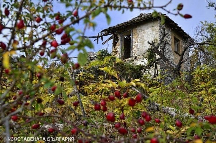 abandoned bulgaria tower berries