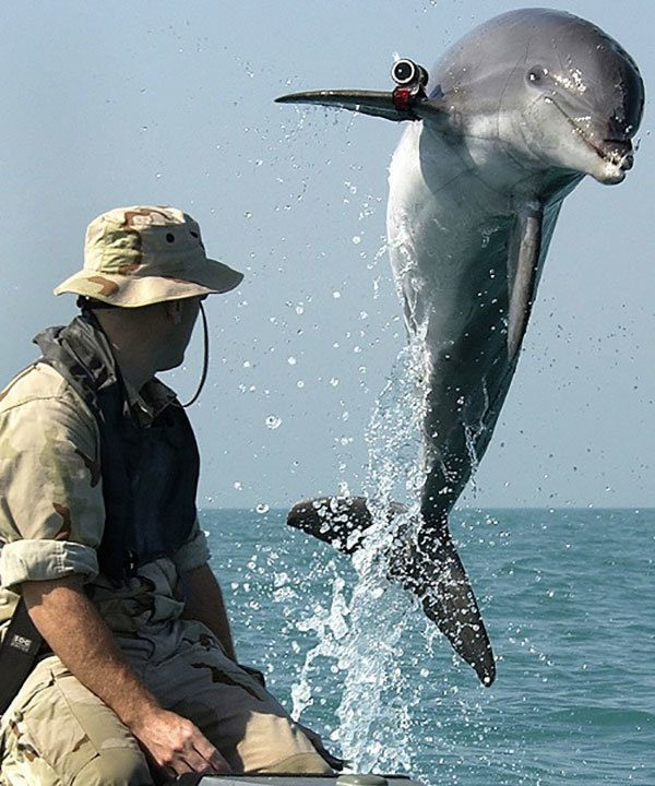 Navy's Marine Mammal Program