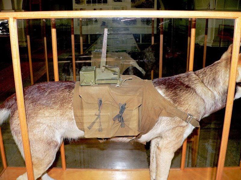 War Dog Museum