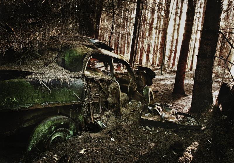 Car Cemetery Forest