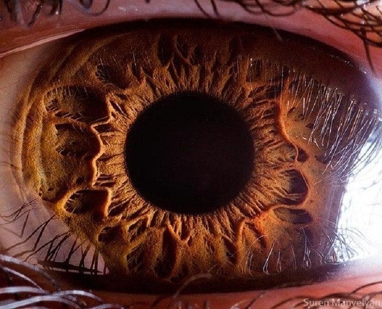 Microscope Bodies Eye