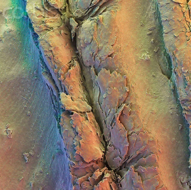 Microscope Bodies Fingerprint