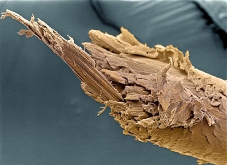 Microscope Bodies Split End