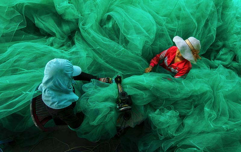 Smithsonian Winners Green Net